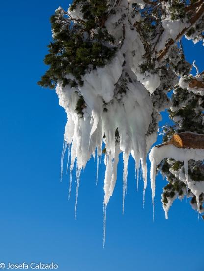 Chupones de hielo