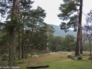 Montes de Valsaín