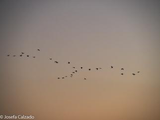 Garzas al amanecer