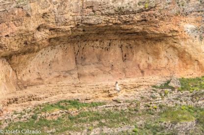 Cueva con grabados Edad del Bronce