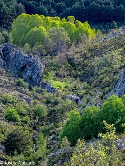 Cauce del arroyo Las Chorreras