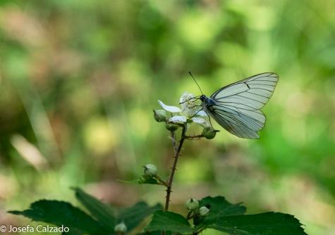 Detalle mariposa