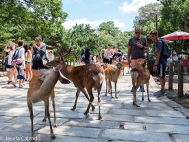 Camino de la entrada del Templo Todaiji