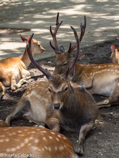 Parque de los Ciervos Sagrados