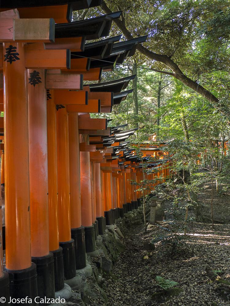 Detalle camino del toriis