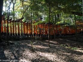 Detalle exterior camino del toriis