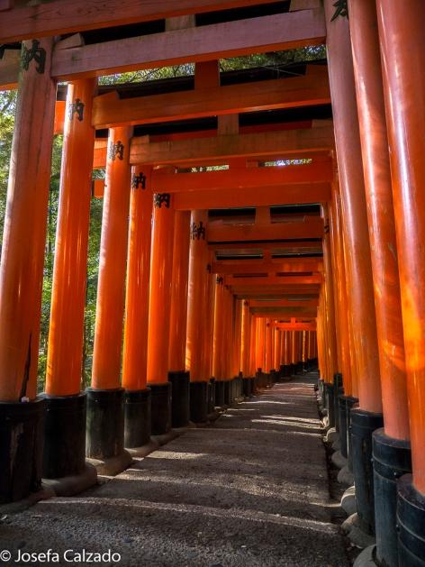 Imagen icónica del santuario Fushimi Inari.