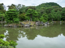 Isla dentro del estanque