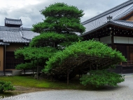 Detalle del paisajismo japonés