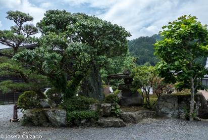 Composición jardín