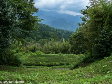 Vista Alpes Japoneses