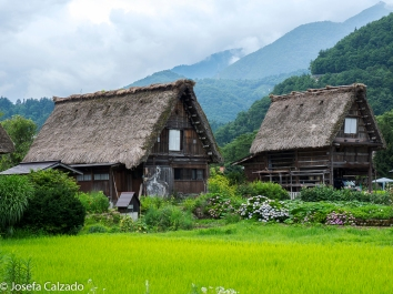 Casas de paja en Ogimachi