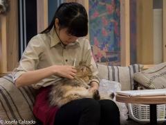 Cuidadora peinando a uno de los gatos