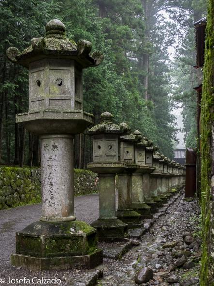 Paseo de linternas de piedra y cedros a la entrada del templo