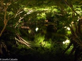 Interior de uno de los lagos del jardín japonés del New Otani