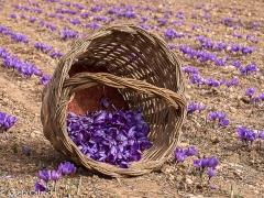 La cesta de la recolección