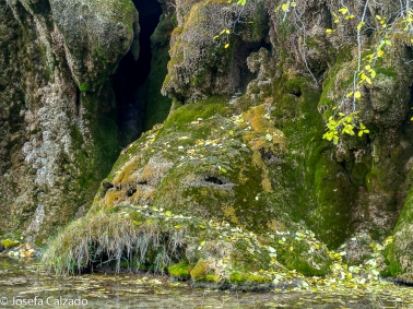 Original roca recubierta de musgo