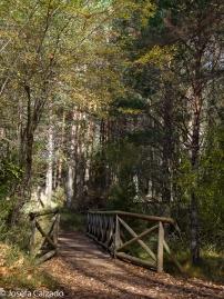 Puente de madera de acceso al parking