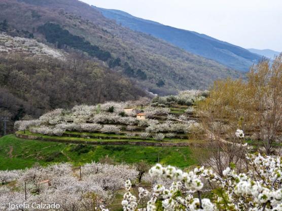 Detalle del valle del Jerte