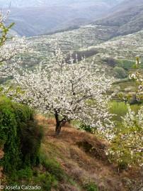 Detalle del valle de Jerte