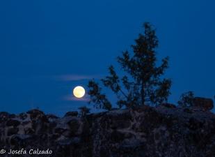 La luna y el árbol