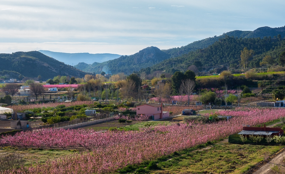 Vista panorámica de los campos desde Cieza