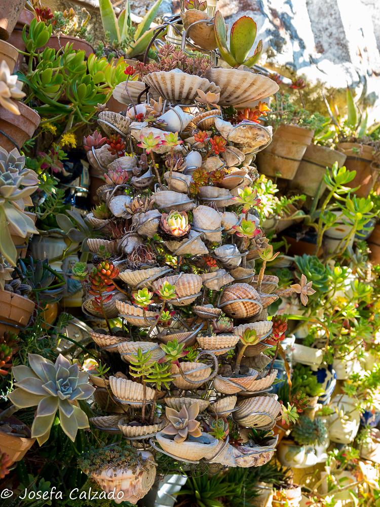 Detalle de cactus