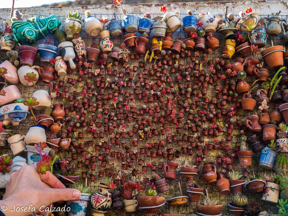 Minidedales y cactus