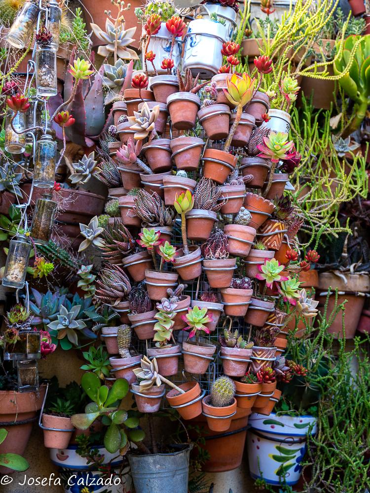 Mini macetas y cactus