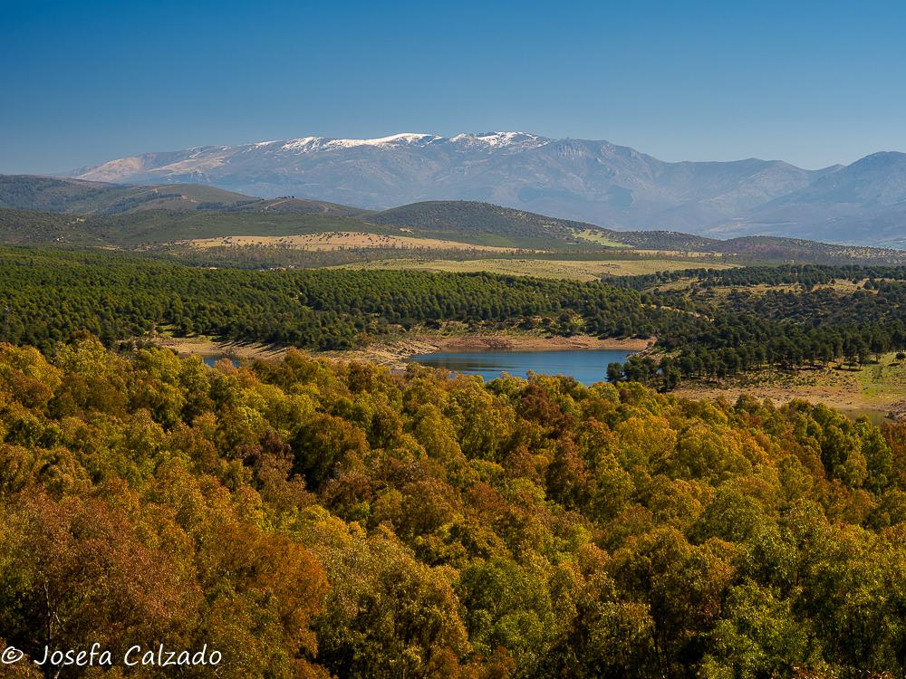 Vista del pinar