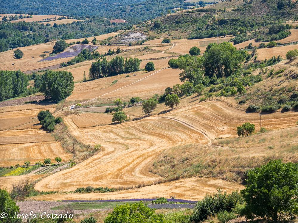 Campos de Brihuega