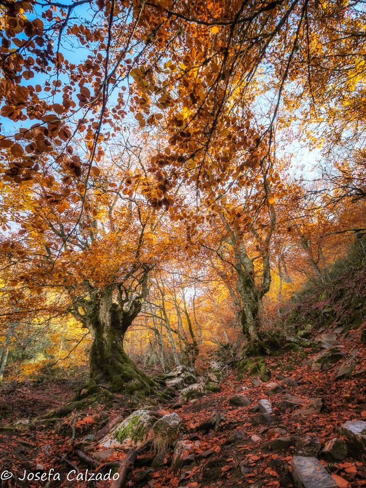 Bosque de hadas
