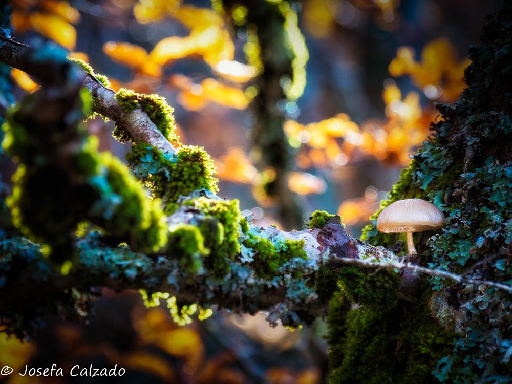 Una luz en el bosque
